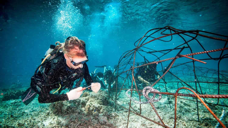 Eco divers installing new BioRock structure in Gili Trawangan