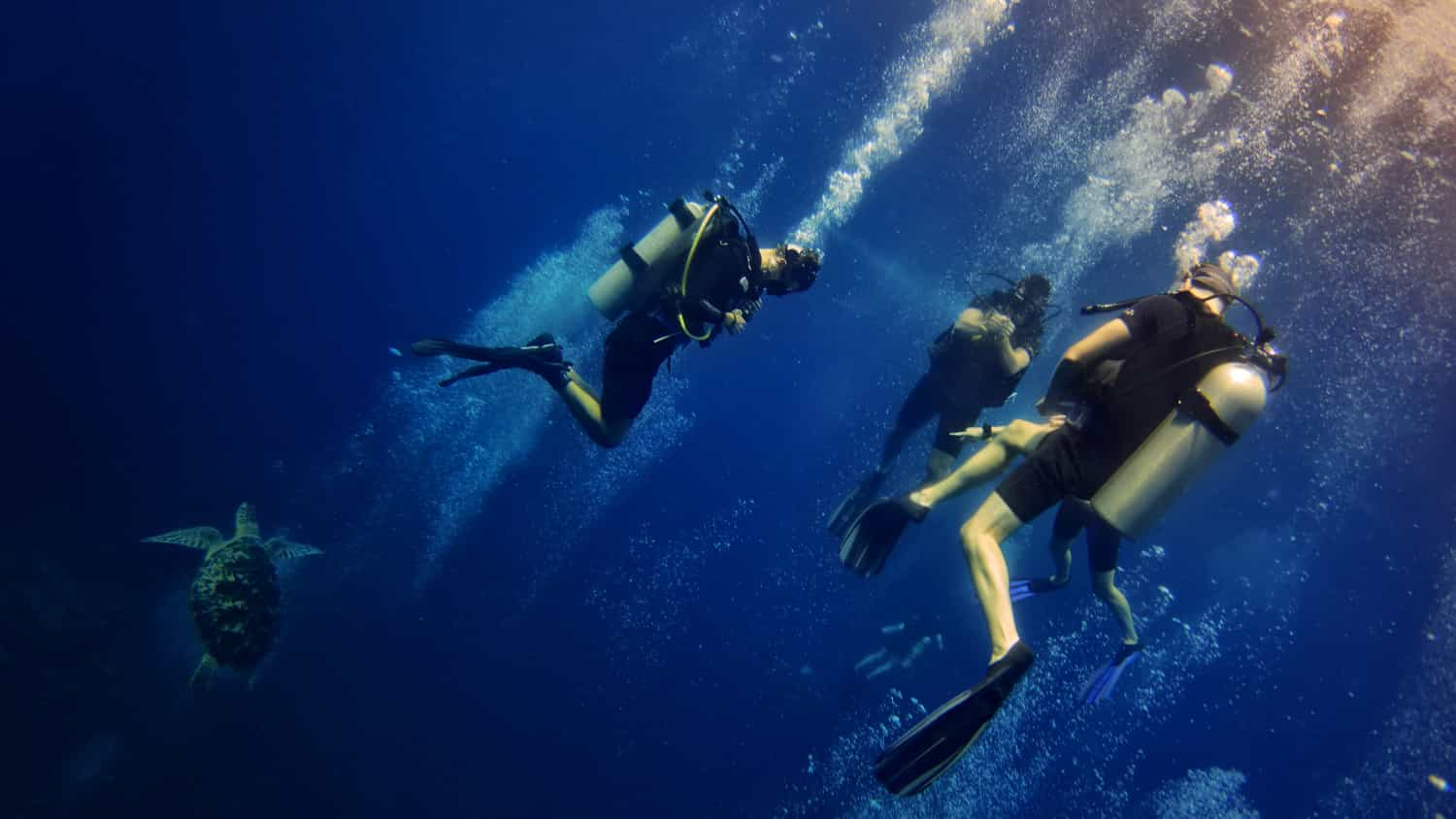 PADI Courses - From Beginner to Instructor and Technical Diving