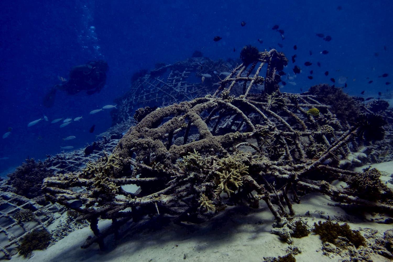 Reef Restoration Program