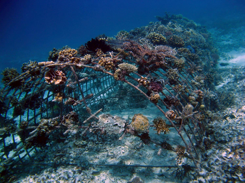 Biorock reef conservation on Gili Islands