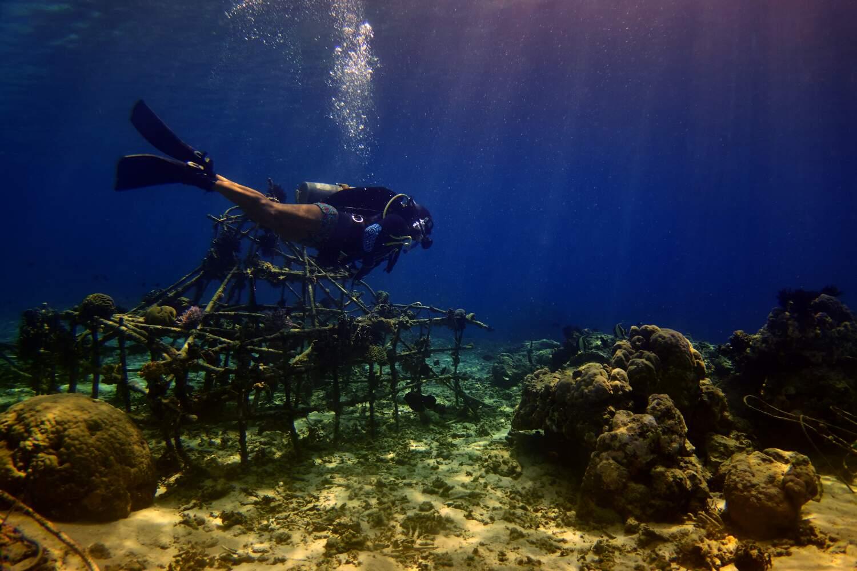 Help the ocean with Trawangan Dive