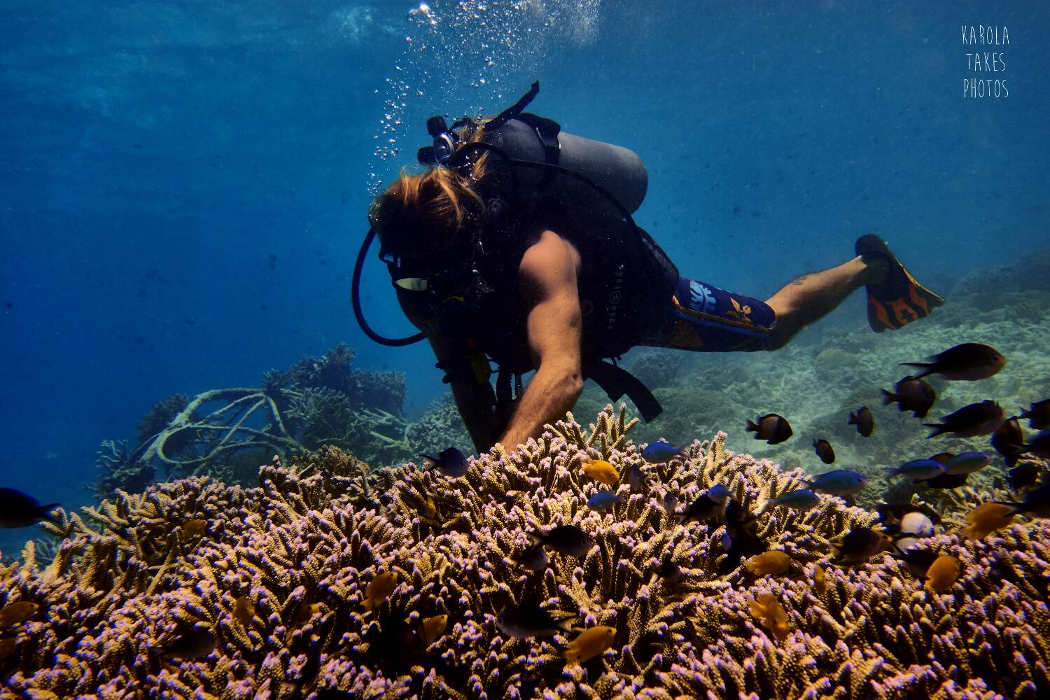 Learn about the foundation of coral gardening