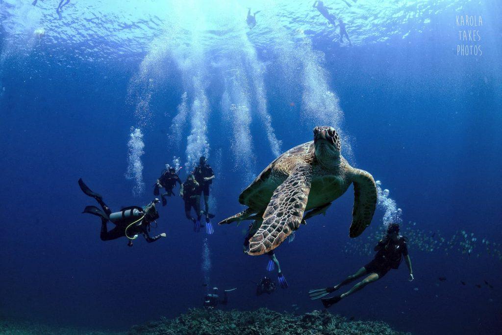 Explore the underwater world of gili trawangan and watch turtles in their natural habitat